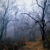 20090319 Velvia50_05-Edit.jpg