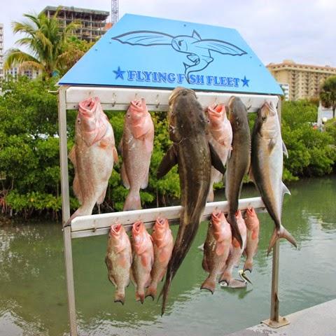 Sarasota Fish
