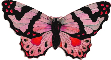 butterflypink