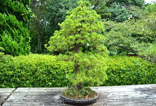 Glória Ishizaka -   Kyoto Botanical Garden 2012 - 47