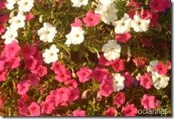 Primavera ÁrabeOut2011