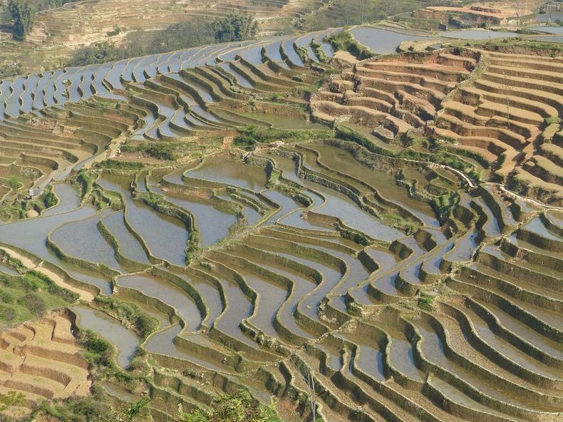 yunnan-rice-terraces-4