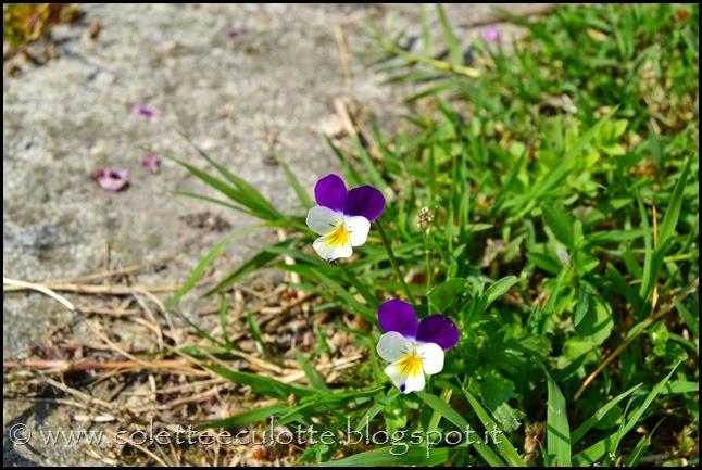 Passeggiata 23 aprile 2014 - Con gli occhi di Culotte (34)