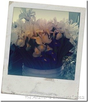 Iris Polaroid