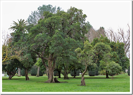 120317_Capitol_Park_Arbutus-unedo_11