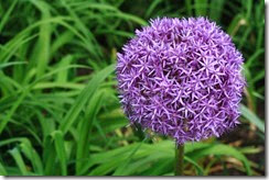 nybg-new-york-botanic-gardens-bronx-028