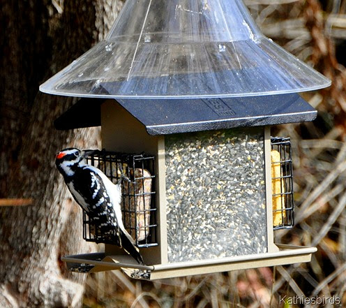 2. bird feeder-kab