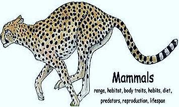 mammal-body