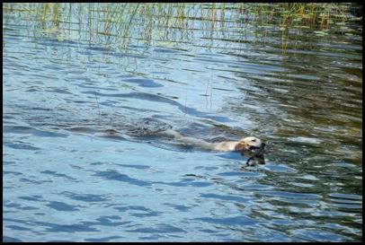 On Jordan Pond 159