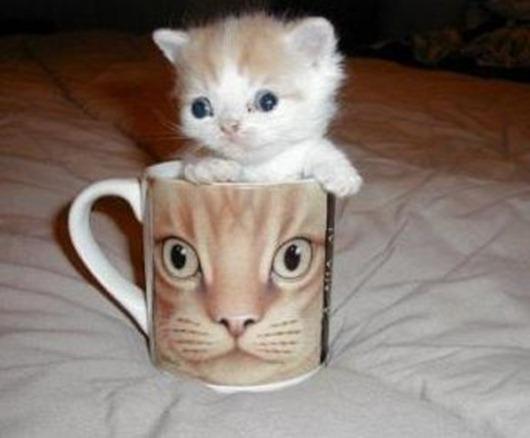 cute_kitten_cup