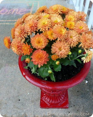 red-planter