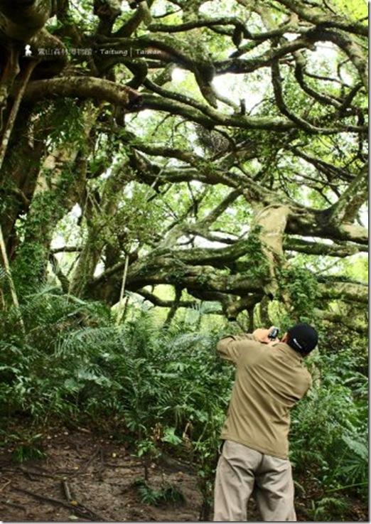鸞山森林博物館,有座巨大森林號稱裡頭的樹會走路,因為這邊的老榕會不斷生長氣根, 很舒服的一個地方!