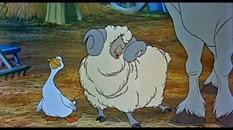 20 le mouton