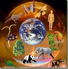 ecology,world-0f4b67b78f7b64b06c7b16b936b86450_h