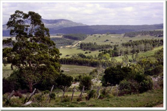 Vista del valle con las plantaciones de Eucaliptus