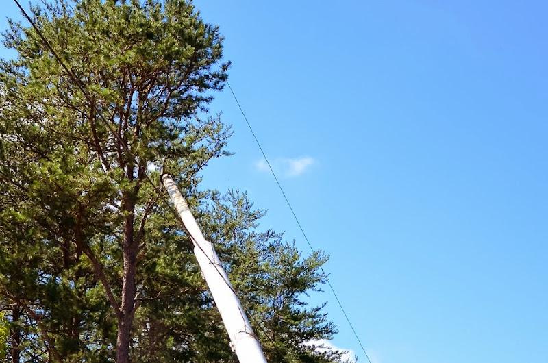 tree cutter-15987