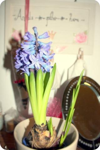 Blue Flower Bulb