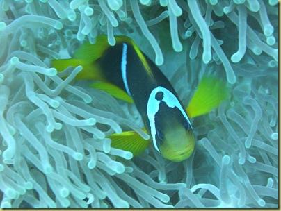 P Nemo