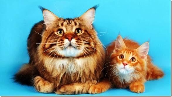 funn-animals-cute-18