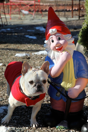 OK, Mr. Gnome - I'll grant your request - but just one photo!