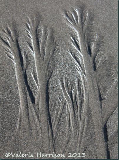 26-sand-trees