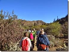 Wild Burro Hike Jan 21 028 (2)