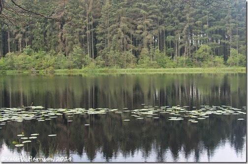 8-Dalbeattie-Loch