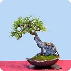 pine_jpg