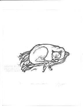 13032201cats-love-shawls72