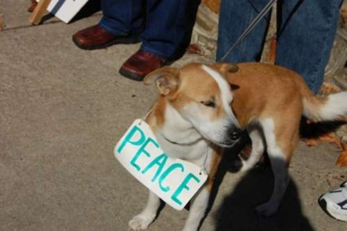 cute-pets-at-occupy-wall-street-23