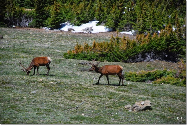 06-19-14 A Trail Ridge Road RMNP (269)