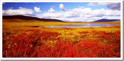 alaska_meadow