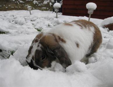 Marmite - Nosing snow