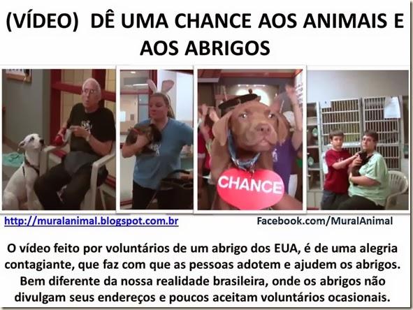 VÍDEO)  DÊ UMA CHANCE AOS ANIMAIS
