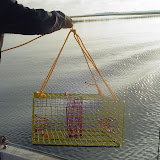Our first drop of the crab trap.jpg