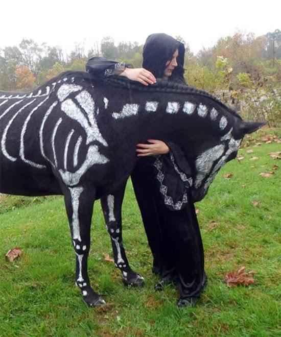Cavalo esqueleto 04