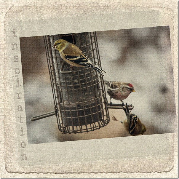 backyard birds with pdpa textures