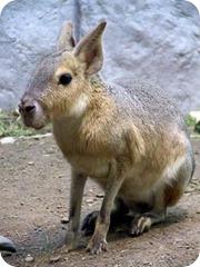animales patagonia mara