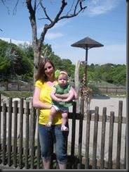 At the giraffe enclosure
