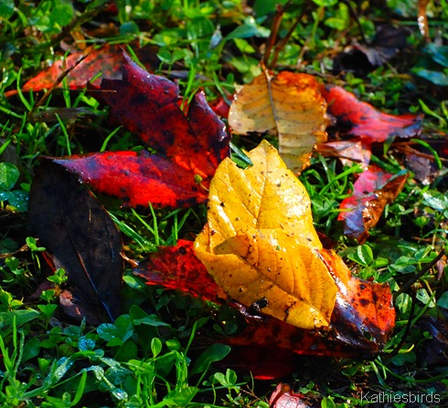8. autumn leaves-kab