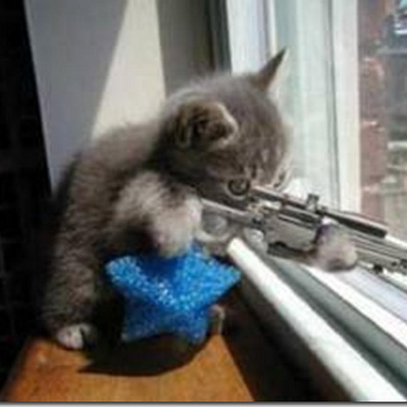 Pendera kucing bakal menerima ugutan maut ??