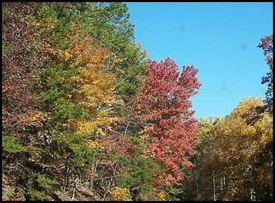 fall-1_thumb2