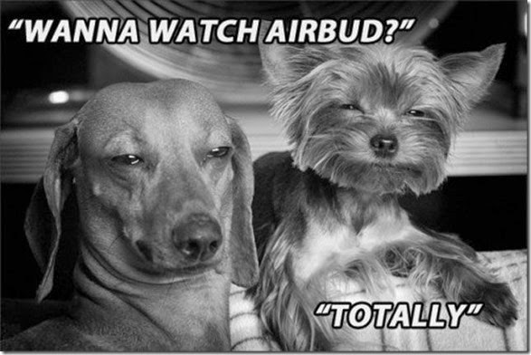funny-high-dogs-002