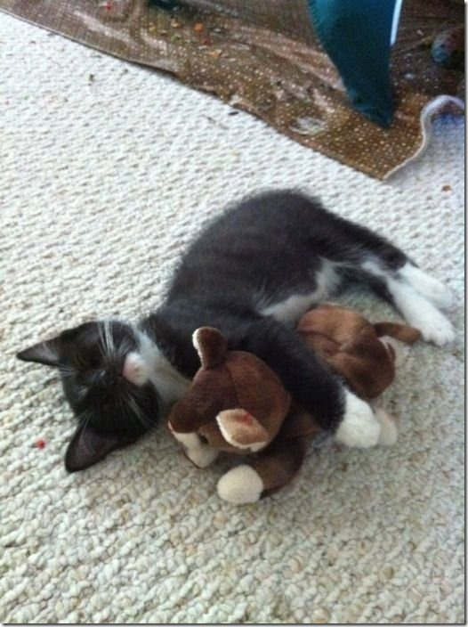 cats-stuffed-animals-26