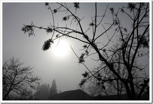 111217_trees3