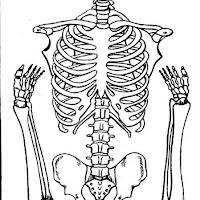 esqueleto%202_gif.jpg