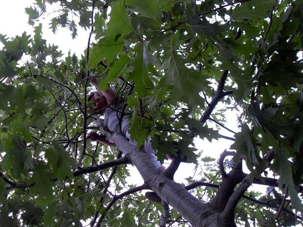 i toppen af et træ