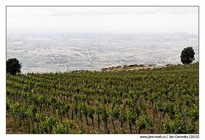 vinice_erice