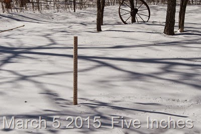 March 5 2015  5 inches of snow