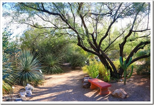 131203_TucsonBotanicalGarden_130